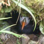 В России снова можно будет собирать яйца попугаев