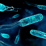 Бактерии что о них нужно знать?