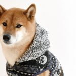 Профессия — оператор собаки
