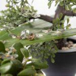 DEAnsect — эластичный робот-насекомое, который выдерживает удар мухобойкой