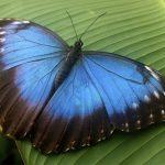 Скрытый код на крыльях бабочки