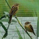 Как пятьдесят птенцов редкой белорусской птицы переселили влитовский заповедник