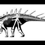 Найден самый древний стегозавр. Останкам 168 млн лет