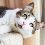 СМИ: компания Sinogene вКитае приступает кмассовой продаже клонированных котов