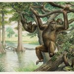 Окаменелости жившего 10 миллионов лет назад примата изменили представление обэволюции человека