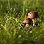 Ученые определили, как грибы влияют наразвитие рака