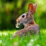 Тайну женского оргазма разгадали при помощи кроликов