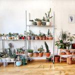 Ученые: комнатные растения насамом деле неочищают воздух вдоме