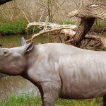 В канадской Арктике найдены носорог ичерепаха