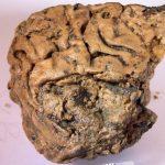 Загадочный мозг сохранился, пролежав вземле тысячи лет