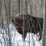 Животные-мутанты ирыжий лес: 10 вопросов эксперту одикой природе Чернобыльской зоны