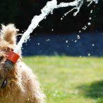 Налей мне: как организовать водоснабжение частного дома